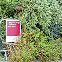 Three ways to recycle your Christmas tree after festive season