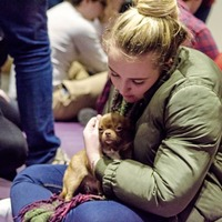 Students help relieve exam stress by petting dogs