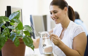 Gardening: 7 indoor plants to boost your work environment and productivity