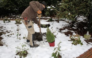 Gardening: 5 ways to succeed with 'boring' conifers