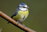 Join the RSPB Big Garden Birdwatch to see if our 'garden birds are flying high'