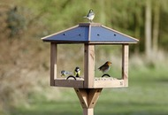 Make a bird cafe to encourage more varieties of bird to visit your garced