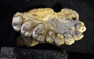 Fossil shows modern humans left Africa up to 100,000 years earlier than thought