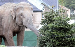 Belfast Zoo says thank you for all the 'tree-mendous' donations