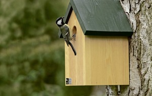 Gardening: How to make a next box that's a happy home for feathered friends