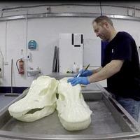 Belfast 3D print specialist ensures Dippy keeps it head on tour