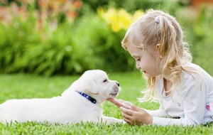 Marie Louise McConville: Hoping that my three-year-old's request for a puppy is just a passing phase