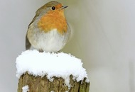 How to help garden birds during harsh weather