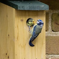 Stephen Colton's Take on Nature: Advice on putting nest boxes in your garden