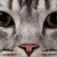 Confused about the US gun debate? This video uses cats to show one side of the argument