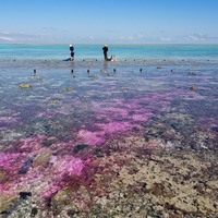 Coral 'heartburn' study prompts greenhouse gas warning