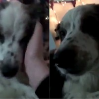 Watch the remarkable moment this dog said 'I love you' to her owner