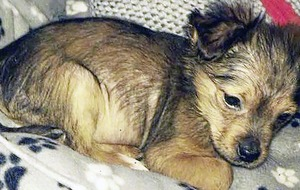 Man faces charges over death of puppy has bail application adjourned