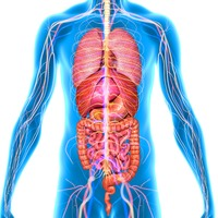 Scientists say they've discovered a new human organ