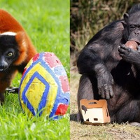9 pictures of animals eating Easter eggs that will make your weekend