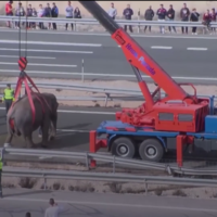 Elephant dies and four recovering from injuries after Spanish highway crash
