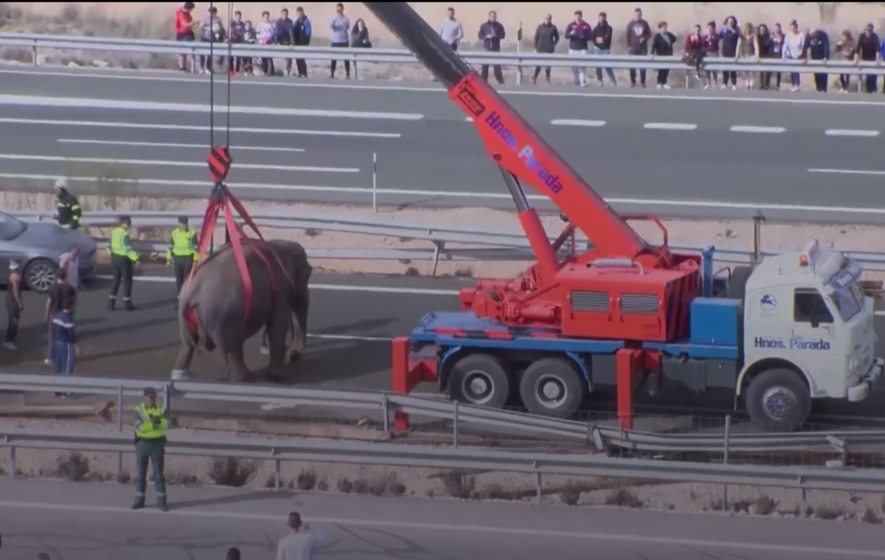 Circus truck overturns, elephants escape