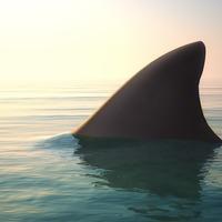 Watch as Australian police encounter a shark bigger than their patrol boat