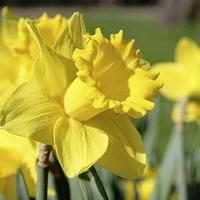 Seven tasks to kick-start the growing season