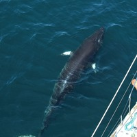 New laser technology to help research into whales and dolphins