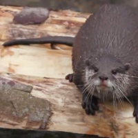 These otters playing with a swing will start your weekend off right