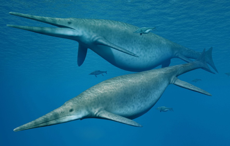 The jaw bone has been identified as that of a giant ichthyosaur up to 26m long