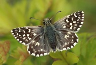 Hopes of butterfly revival dashed by last year's cold weather
