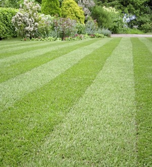 The Casual Gardener: Keep your lawn green with a regular spring clean