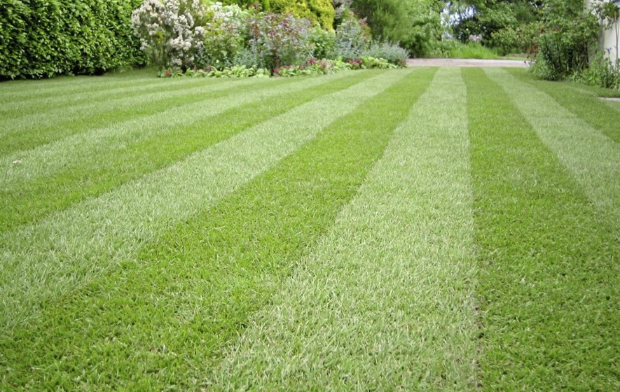 It S Best To Give Your Lawn A Mow Before Scarifying