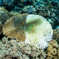 A third of the Great Barrier Reef's coral suffered 'catastrophic die-off' during 2016 heatwave, scientists say