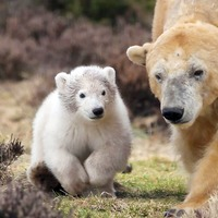 Thousands vote to choose baby polar bear name