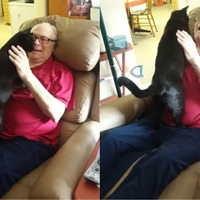 This is the beautiful moment a grandpa was reunited with his cat