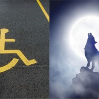 'Chairwolves': Tweet about disabled parking spaces inspires novel