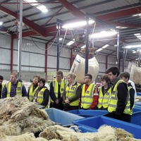Ulster Wool launches new scheme for first time sheep farmers