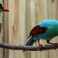 Beautiful songbirds among the rarest in the world arrive at Newquay Zoo