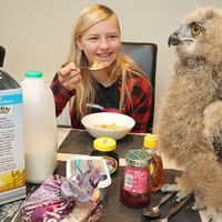 Living with owl chick Benedict is a hoot, safari park keeper says