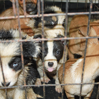 27 smuggled puppies rescued at Scottish port