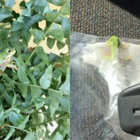 This man rescued a tiny tree frog from his car and it's surprisingly cute