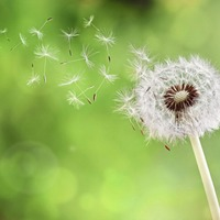 10 easy ways to ease your hay fever symptoms this summer