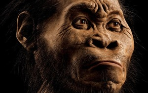 Ancient hominin's tiny brain raises big questions about human evolution