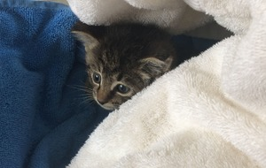 Chimney sweep helps rescue kittens stuck in pipe