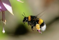 The Casual Gardener: Bee aware – steps you can take to help pollinators survive