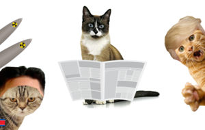 How this cat website harnesses feline power to bring attention to world news
