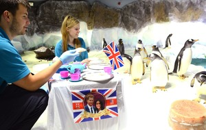 Zoos and aquariums are getting into the royal wedding spirit, and it's adorable