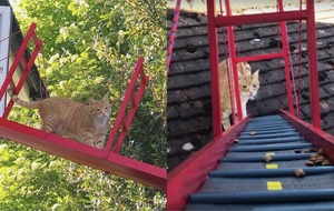 This guy built a mini Golden Gate Bridge to help his cat go to and from his room