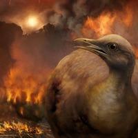 Only flightless birds survived dinosaur meteor strike, scientists believe