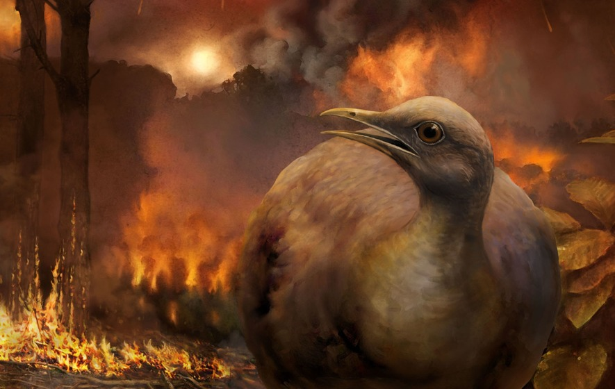 Modern birds evolved from ground-dwelling ancestor, after asteroid hit