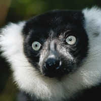 Gibbon, lemur and tortoise stolen from zoo after thieves cut a hole in the fence