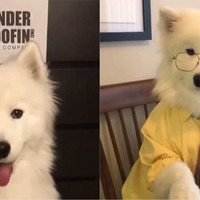 This is the dog version of The Office and it's unmissable