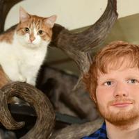 Madame Tussauds unveils Ed Sheeran figure at cat cafe